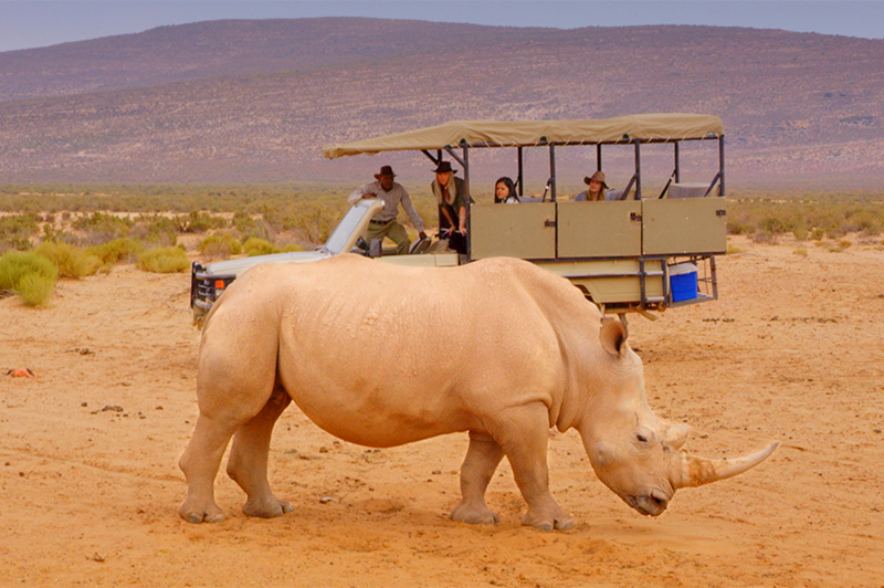 rhino at aquila game reserve