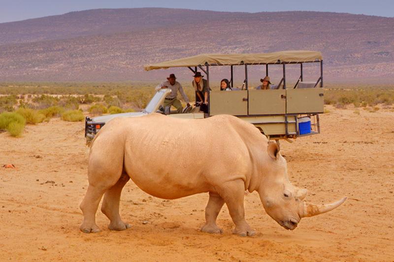 rhino at aquila game reserve