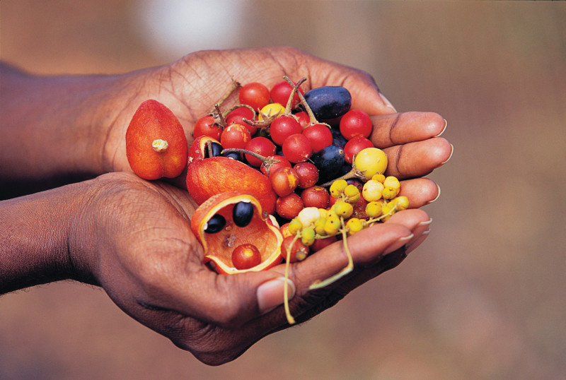 native australian fruits in cupped hands