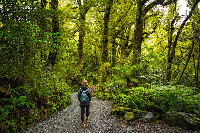 9 things to do new zealand that aren't skiing - woman hiking in a forest