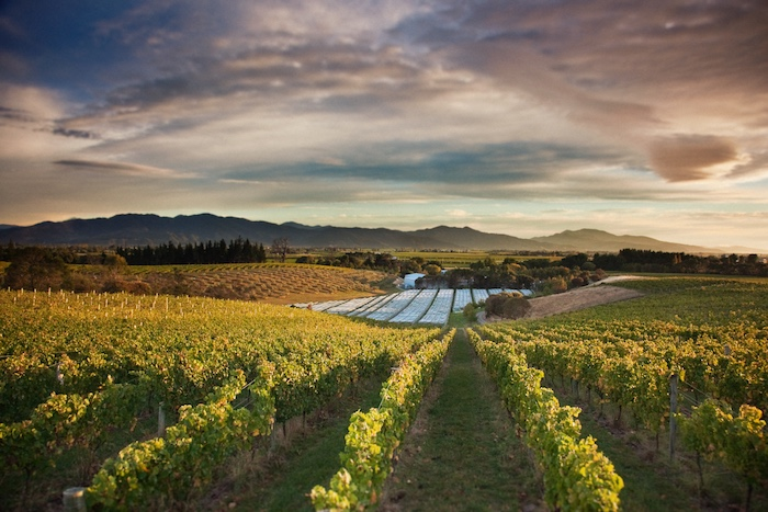 9 things to do new zealand that aren't skiing - Dog Point Winery