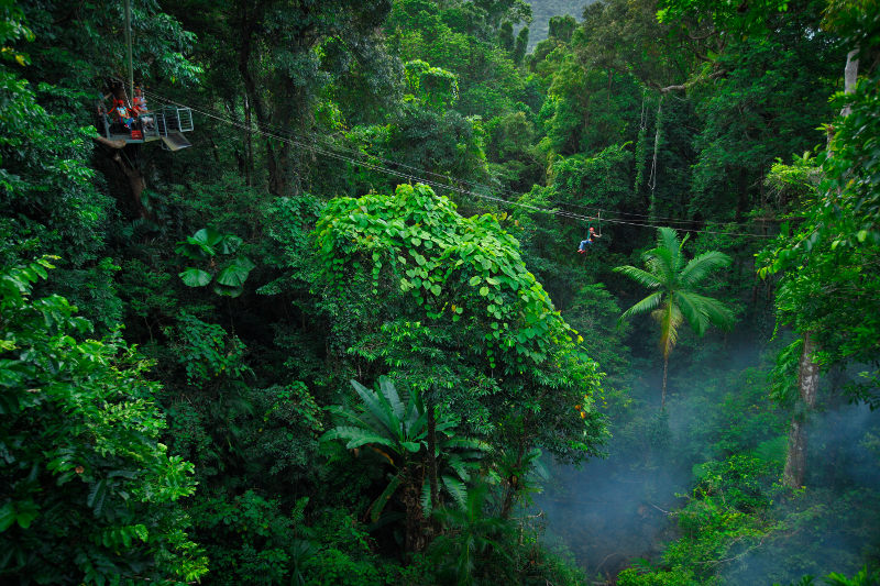 Person riding a zipline over rainforest canopy