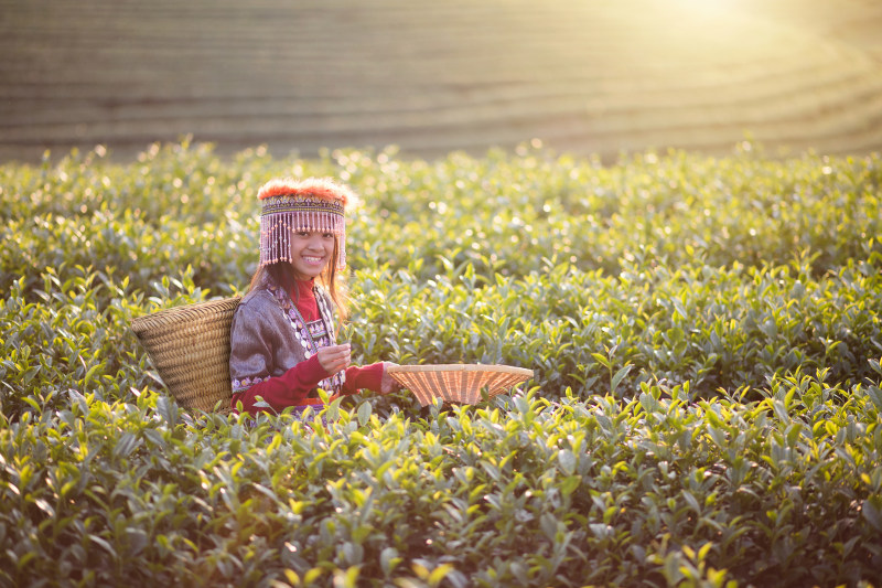 A young girl in a field in Chiang Mai, Thailand.