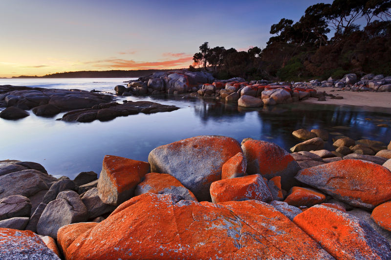 Orange lichen covers rocks at Tasmania's Bay of Fires.