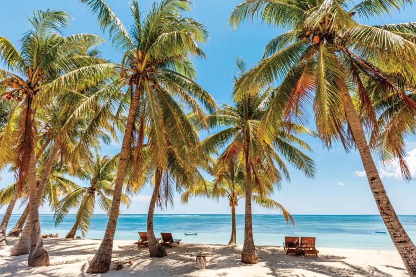 sun loungers beneath palm trees