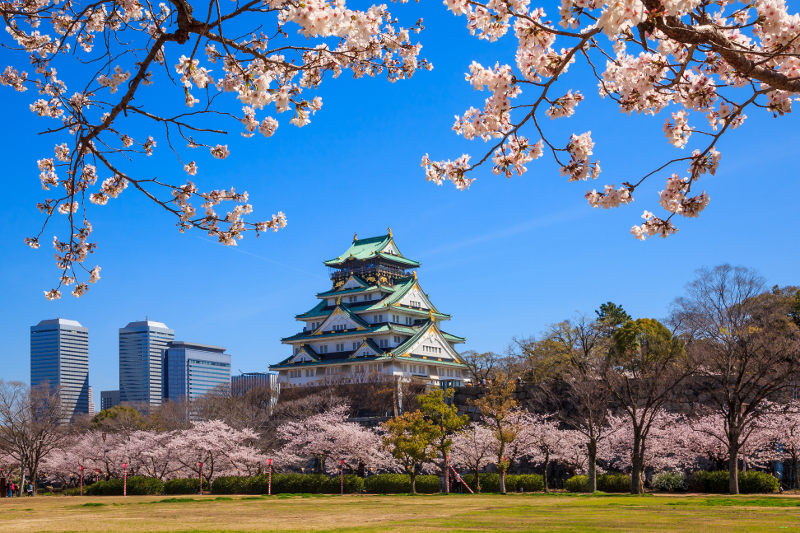 Stunning Osaka castle rises above a sea of cherry blossoms. Image: Getty