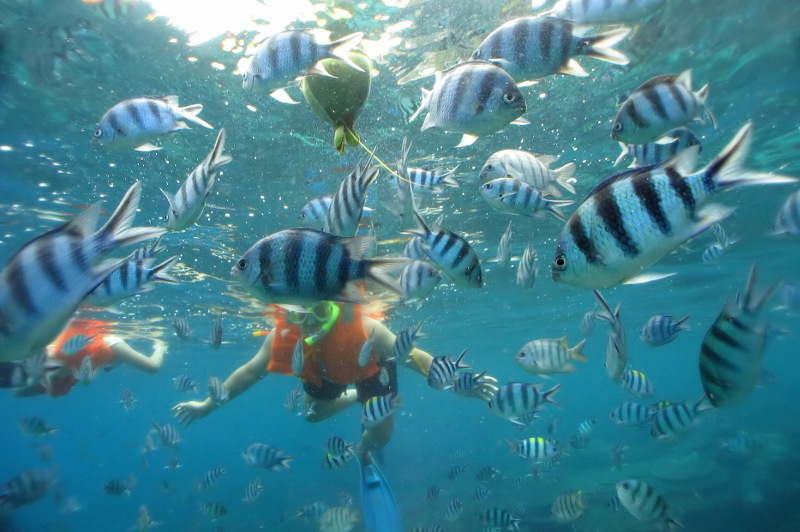 A snorkeller swims among a school of fish in the Perhentian Islands, Malaysia.