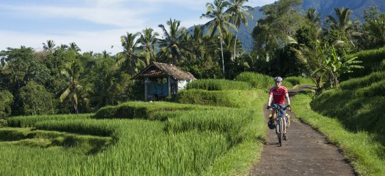 Bali Adventure: Cycling Through Countryside