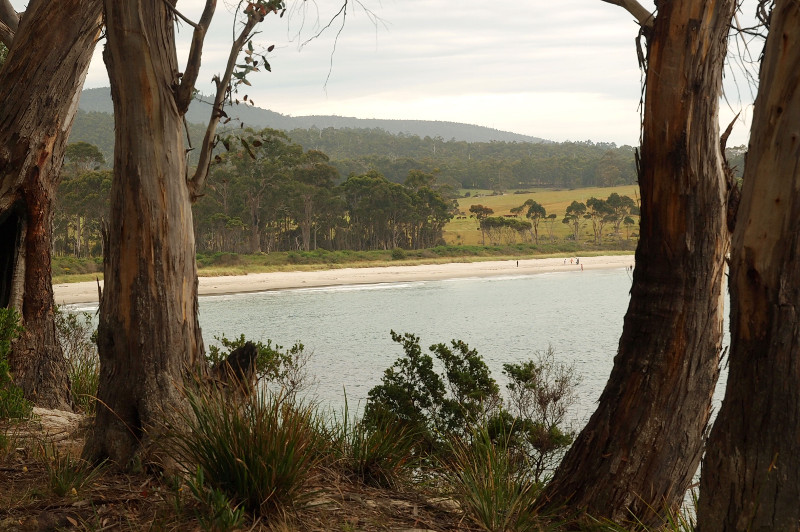 View near Cockle Creek