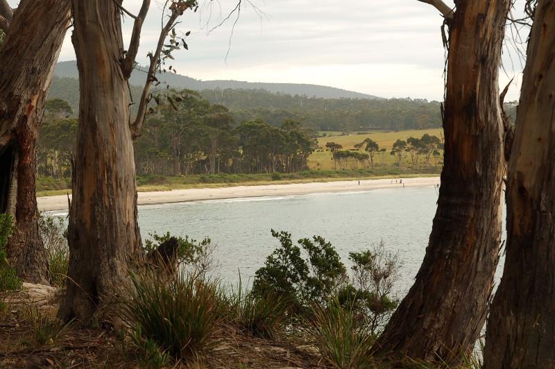 View near Cockle Creek