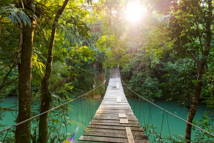 A wooden bridge connects two sections of jungle over a a river in Belize as sunlight filters through the trees - cruise trends to try