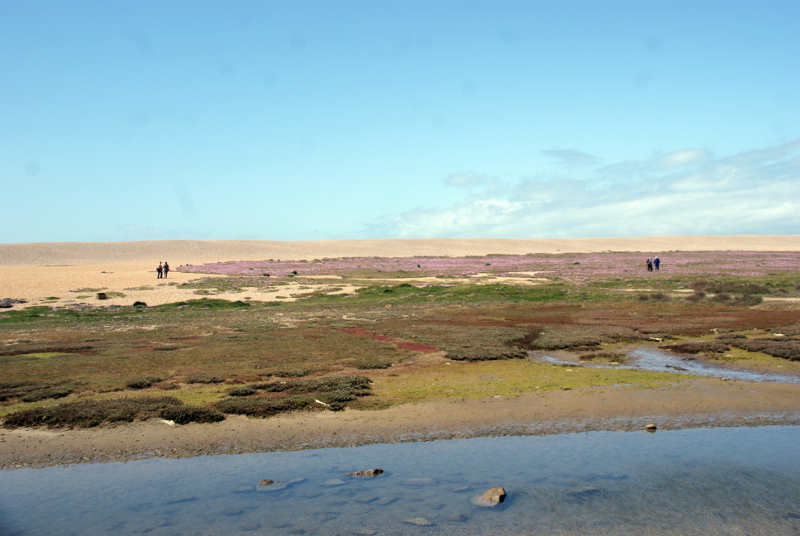 Chesil Beach.