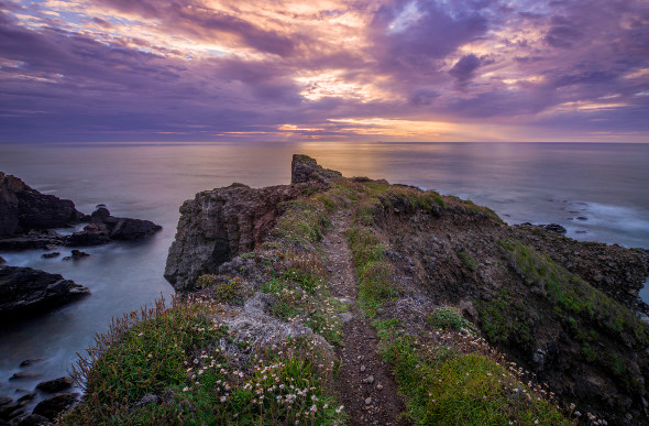 The rugged Cornwall coastline is strewn with wildflowers as the sun sets.
