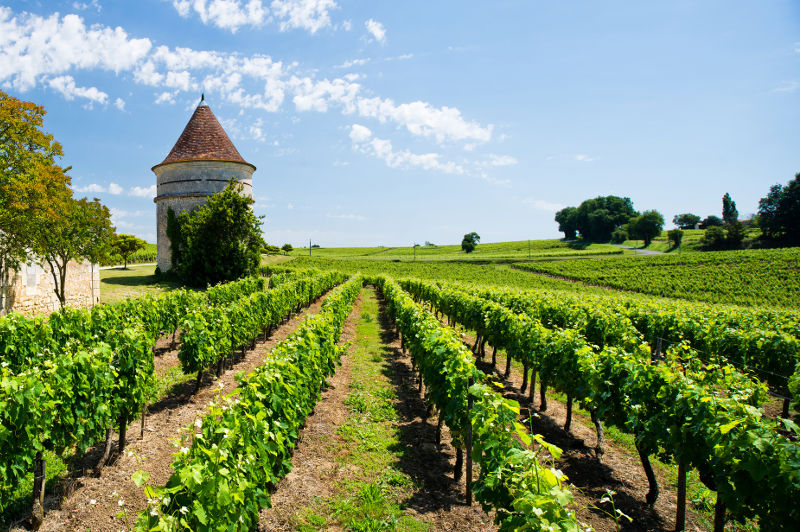 Vineyards and a stone building in the Bordeaux region of France.