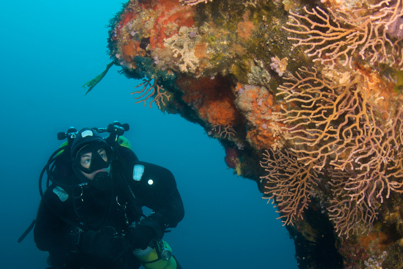 a person scuba diving in Northland