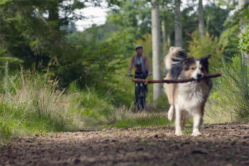 A dog runs with a stick at Drumlanrig Castle, Scotland.