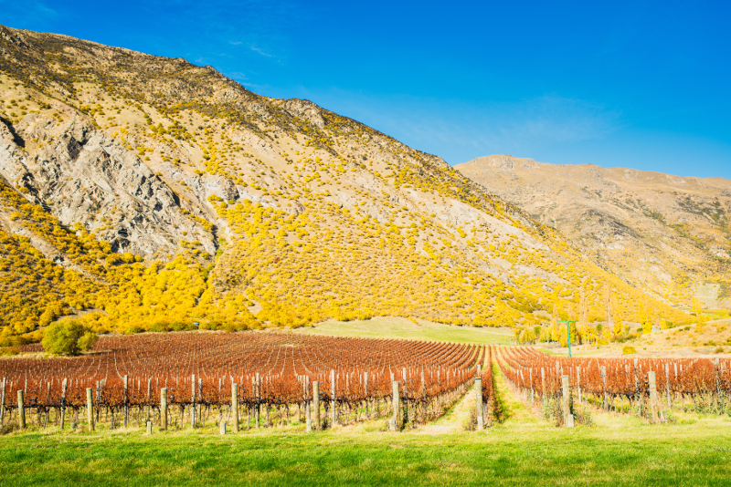 Landscapes of Central Otago.