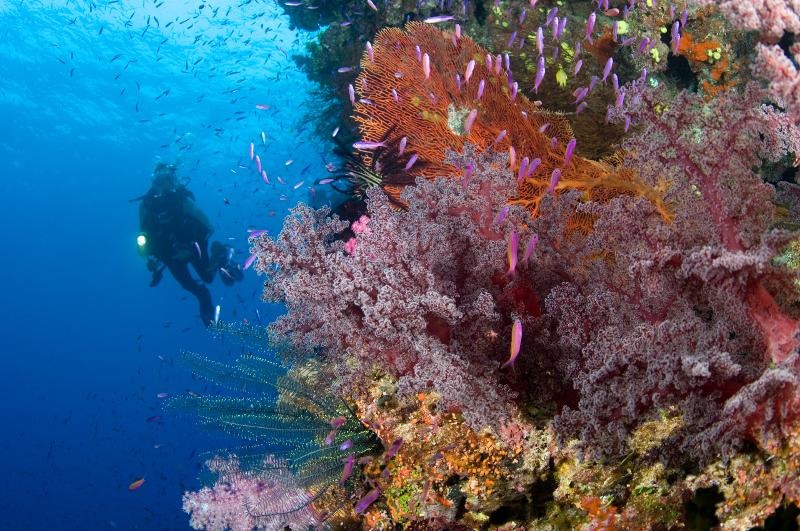 Diving in Fiji.