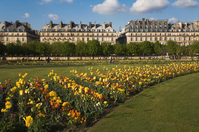 Tulips in the Tuileries Garden, Paris.