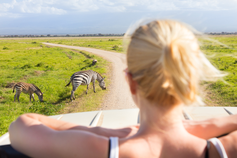 Spotting zebras on safari.
