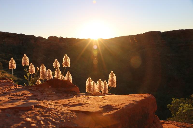 Sunrise at Kings Canyon.
