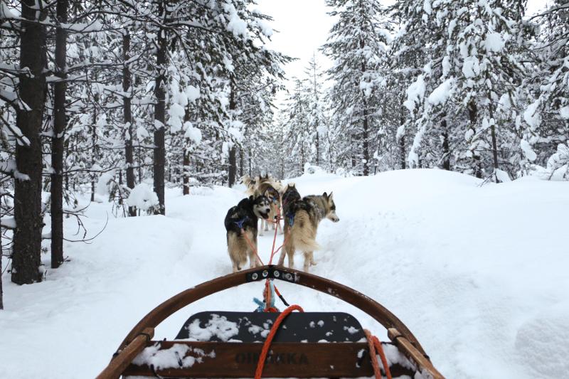 Rovaniemi dog sled.