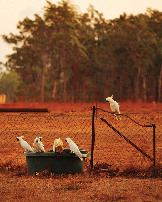 cattle station locals in cape york qld