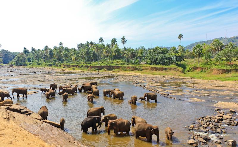 Sri Lankan elephant sanctuary
