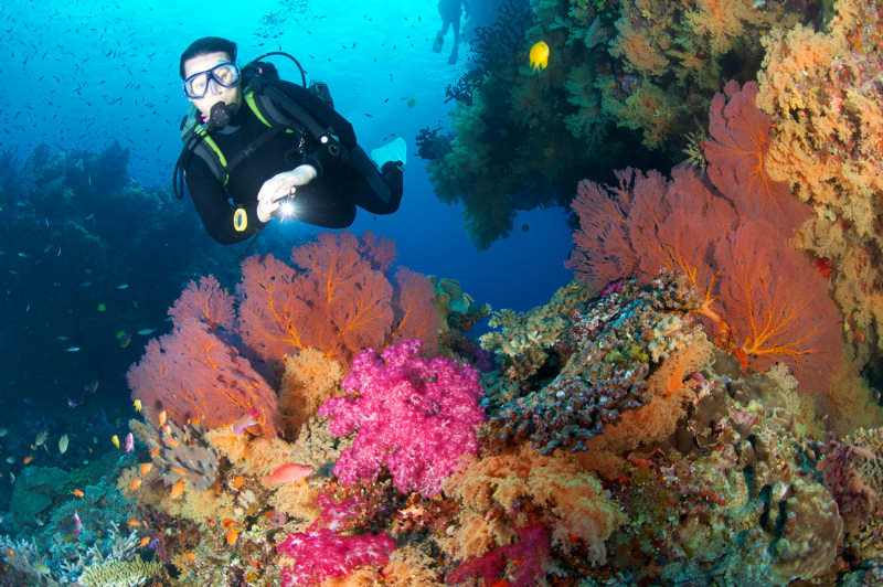 A diver shines a light on vivid soft corals in Fiji.