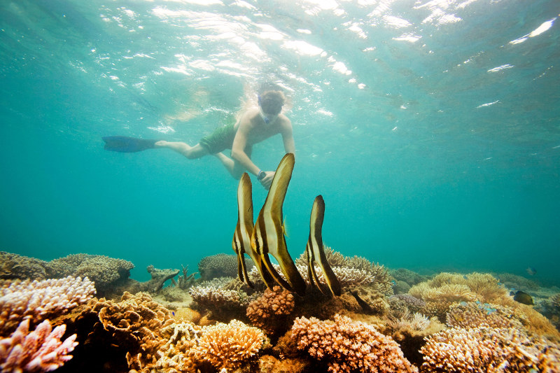 A snorkeller eyeballs some batfish in Fiji.
