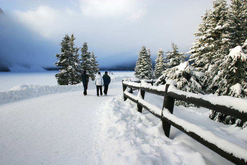 Lake Louise's iconic snow capped fir trees