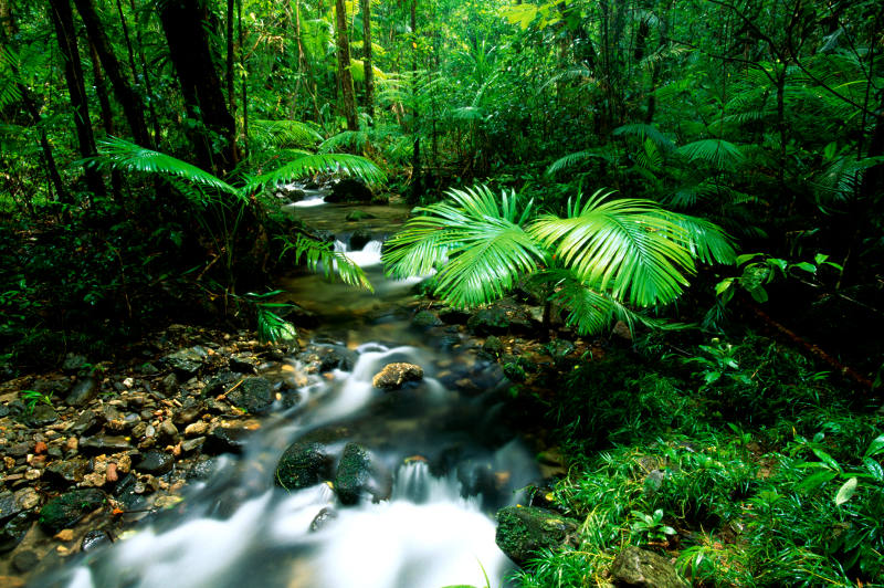 Bright green plants in Queensland's Daintree Rainforest.