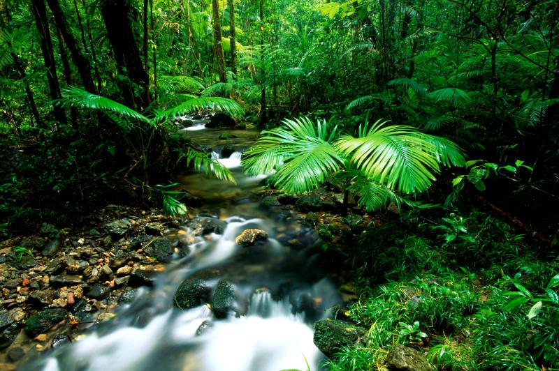 Bright green plants in Queensland's Daintree Rainforest.