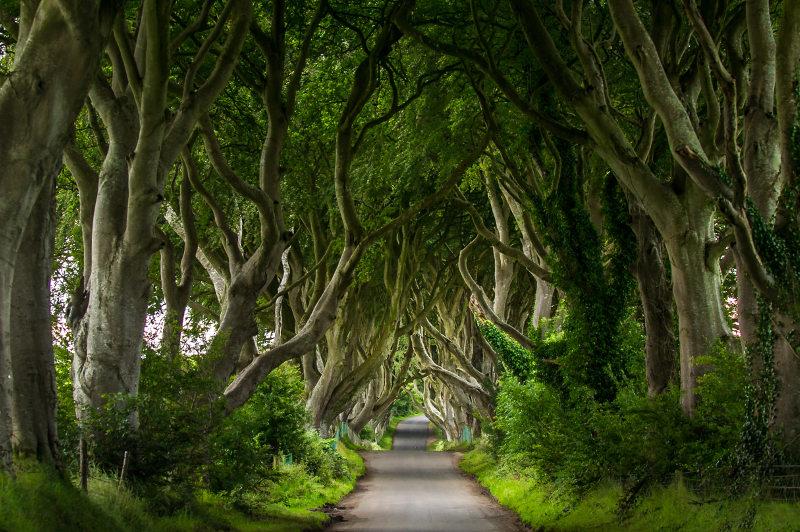 Northern Ireland's Dark Hedges, an avenue of 18th-century beech trees.