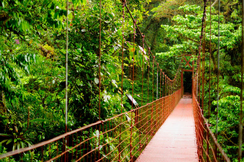 A treetop walkway through the Monteverde Cloud Forest Reserve in Costa Rica.