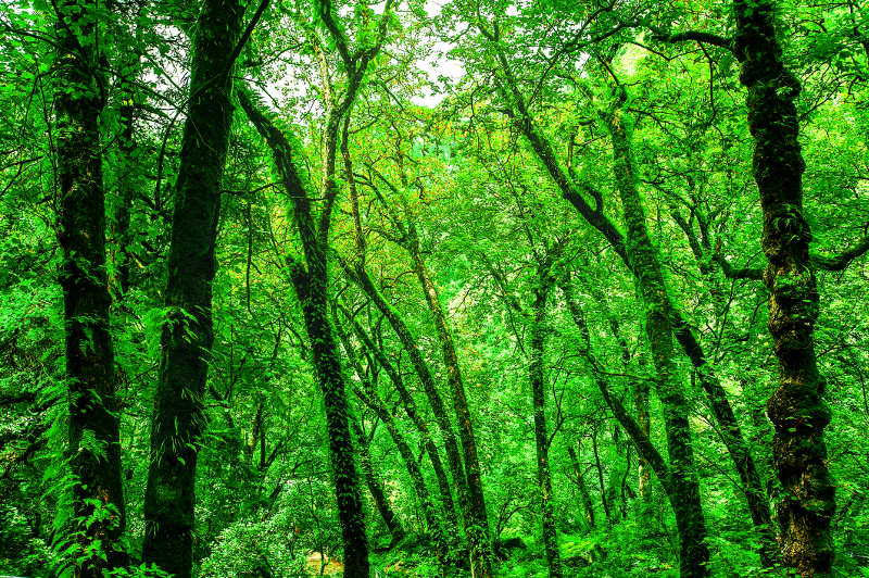 A bright green forest in the Valley of Flowers National Park, Uttarakhand, India