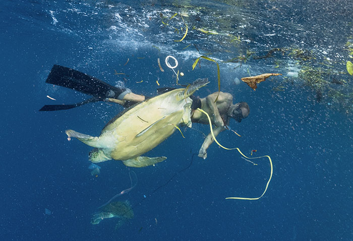 diver helping untangle turtle from rubbish