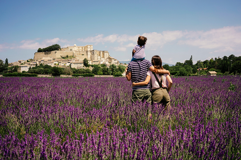A field of lavender in Provence, France
