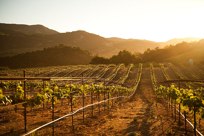sonoma vineyards california