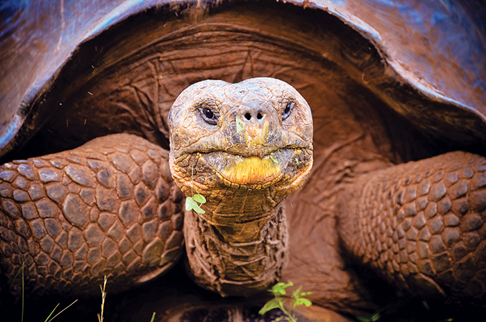 The wise eyes of a Galapagos giant tortoise.