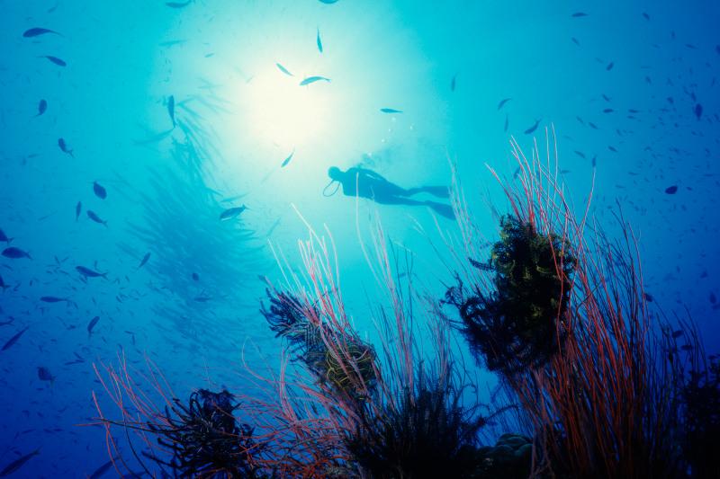 Scuba diving in Madang, Papua New Guinea