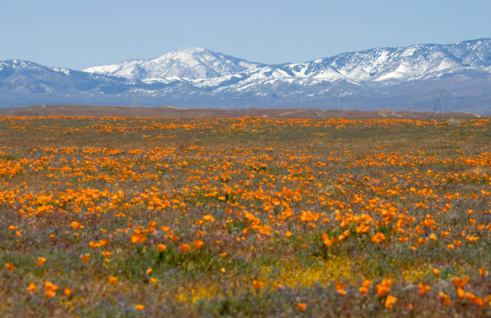 antelope valley wildflowers and mountains california