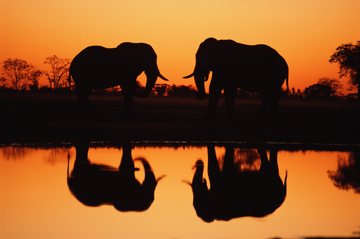 two Elephants roam the banks of the Chobe River in Botswana - romantic travel experiences for valentines day