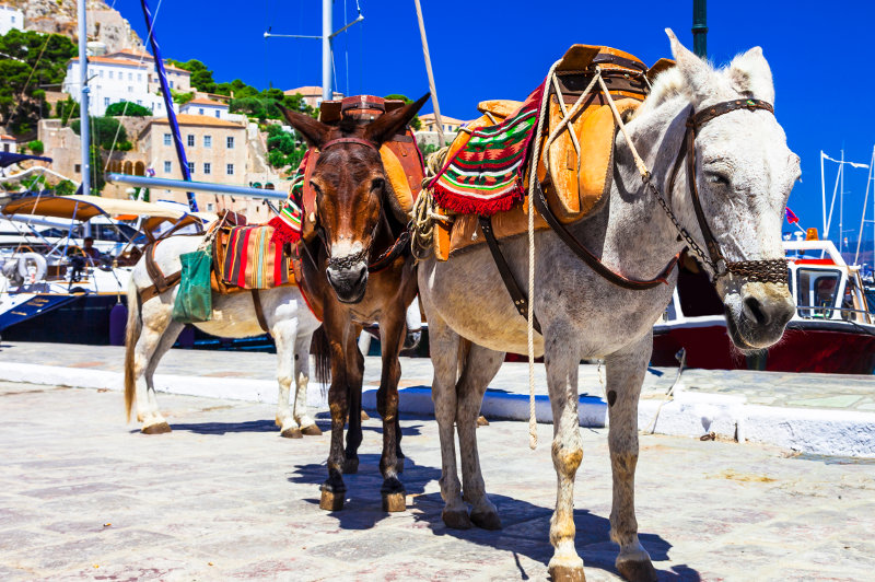 Donkeys for hire on the waterfront in Hydra, Greece.
