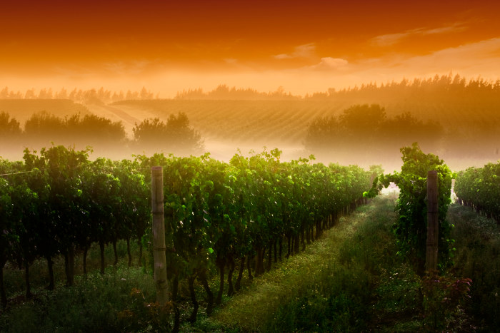vineyard hills sunrise