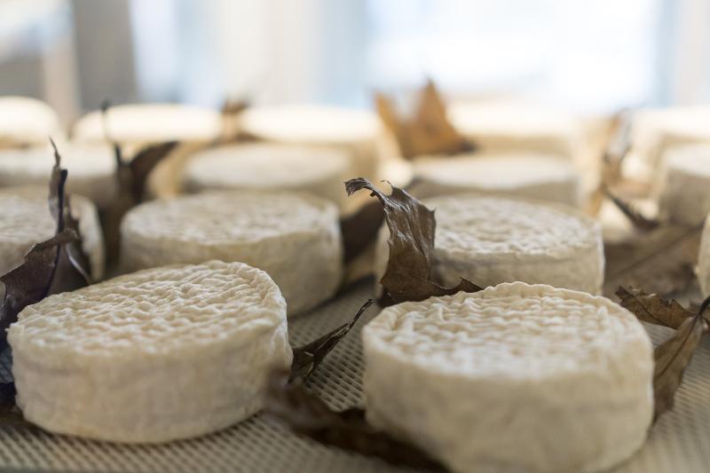 soft cheeses at a market