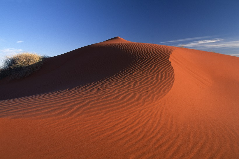 Red dunes of the Simpson Desert.