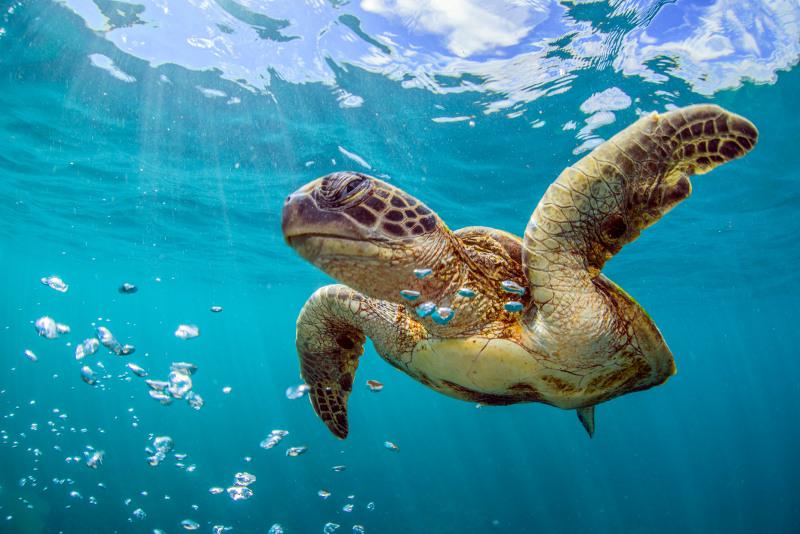 Sea Turtle Perth Australia