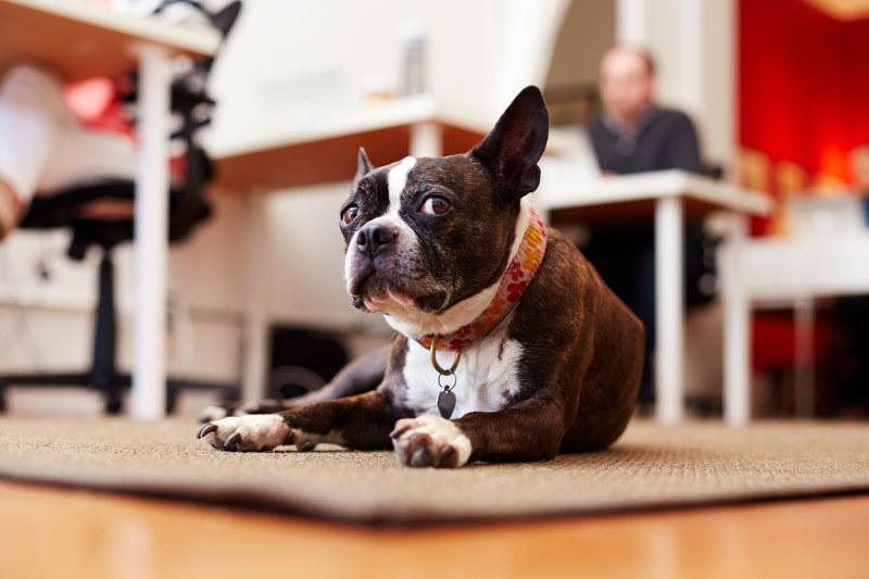 dog on office floor