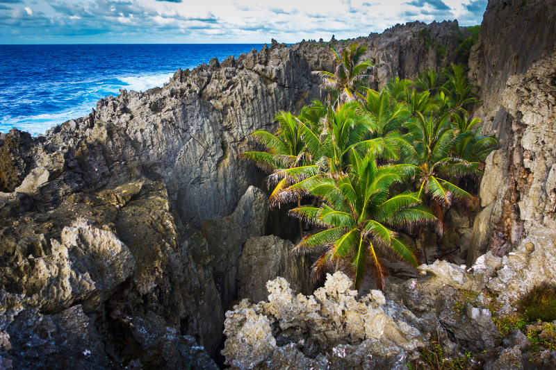 palm trees on the rocky island of Niue